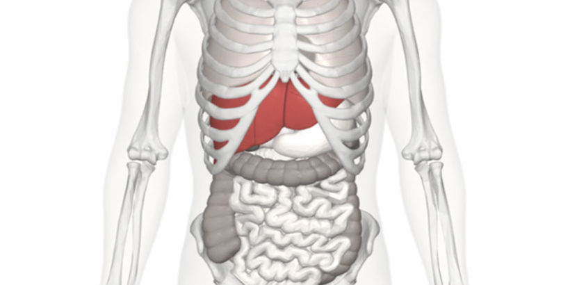 img8 820x410 - Why The Human Liver Matters